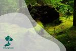 Mengenal Hutan Lumut