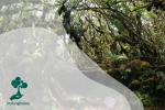 Pesona Hutan Lumut Gunung Singgalang