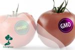 Mengenal Rekayasa Genetik Pada Tumbuhan