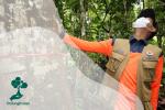 Mengenal Pelahlar, Pohon Endemik Langka dan Nasibnya Kini