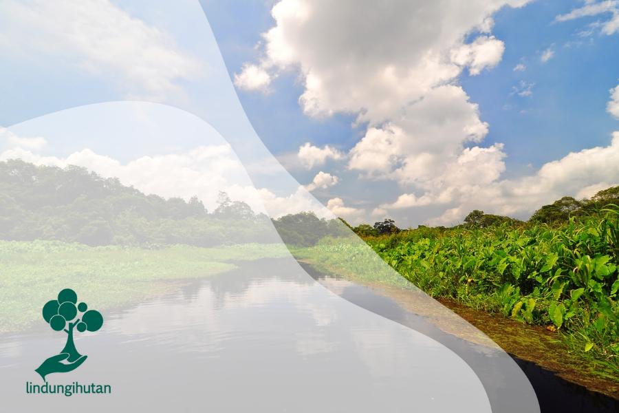 Rawa Danau: Hutan Air Tawar yang Langka dengan Beragam Penghuni