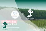 Plant Your Tree with Little Tree!