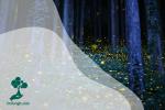 Mengapa Kunang-kunang Dapat Bercahaya di Kegelapan Hutan?