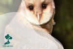 Mengenal Lebih Jauh Burung Hantu