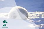 Kenali 6 Jenis Hewan yang Hidup di Arktik