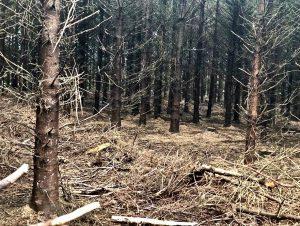 Gambar 3. Forest Dieback