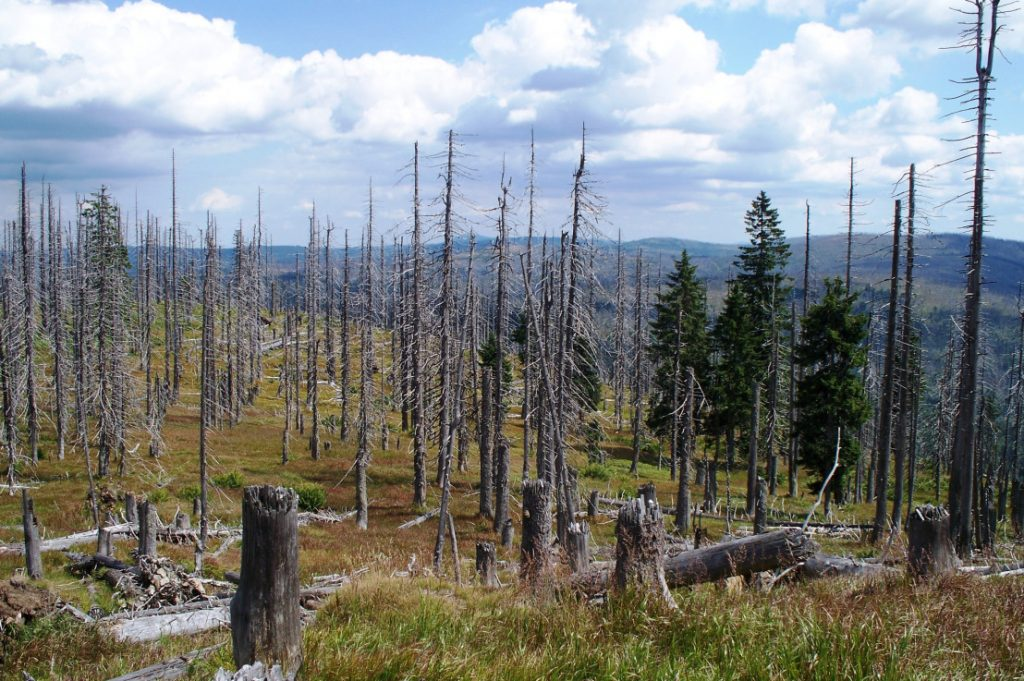 Gambar 1. Ilustrasi Forest Dieback