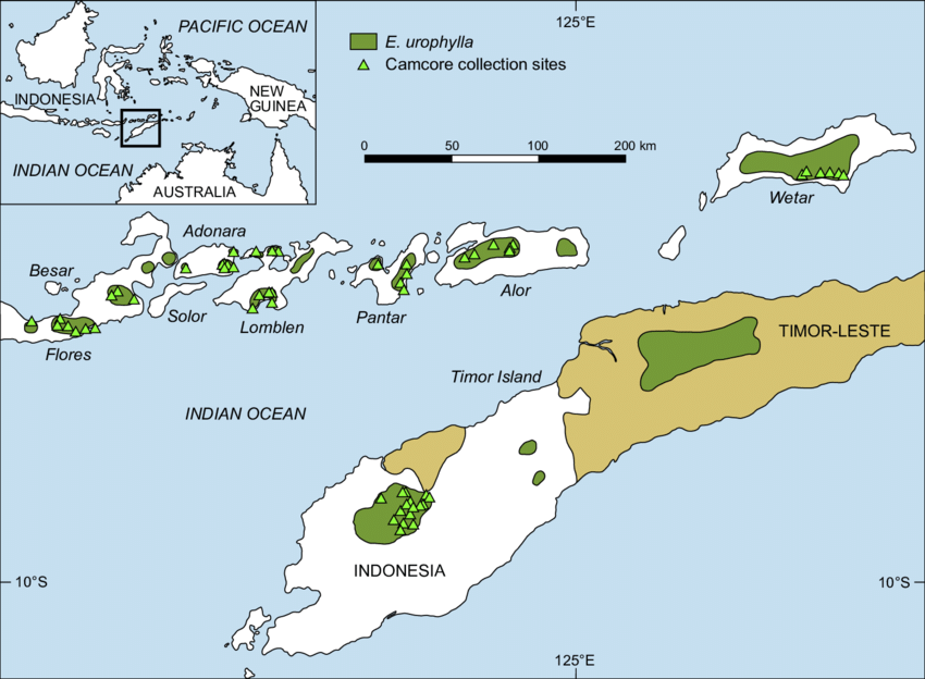 Gambar 2. Geographic range of Eucalyptus urophylla © researchgate.net