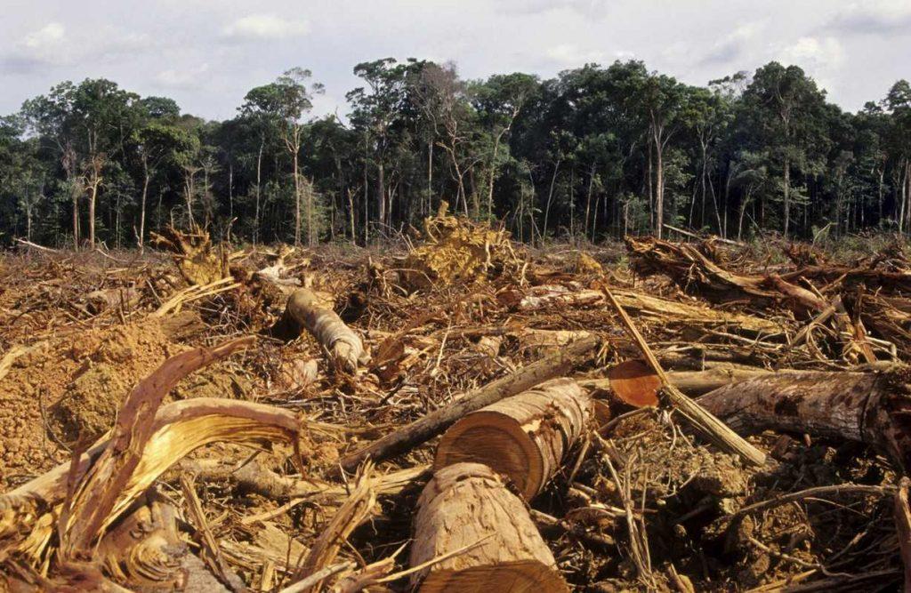 Penebangan Hutan Habitat Musang Luwak © Kompasiana.com