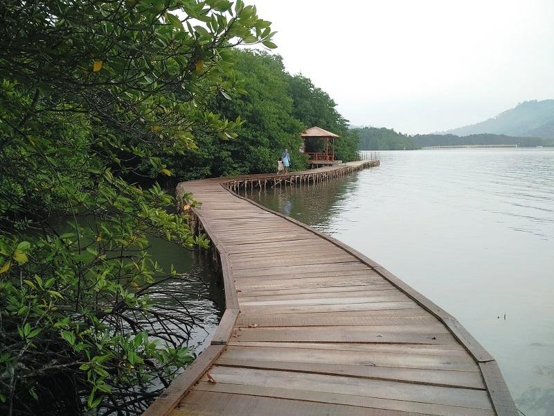 Hutan Mangrove © hipwee.com