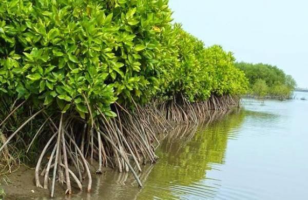 Hutan Mangrove © Dinas Lingkungan Hidup Kab. Buleleng