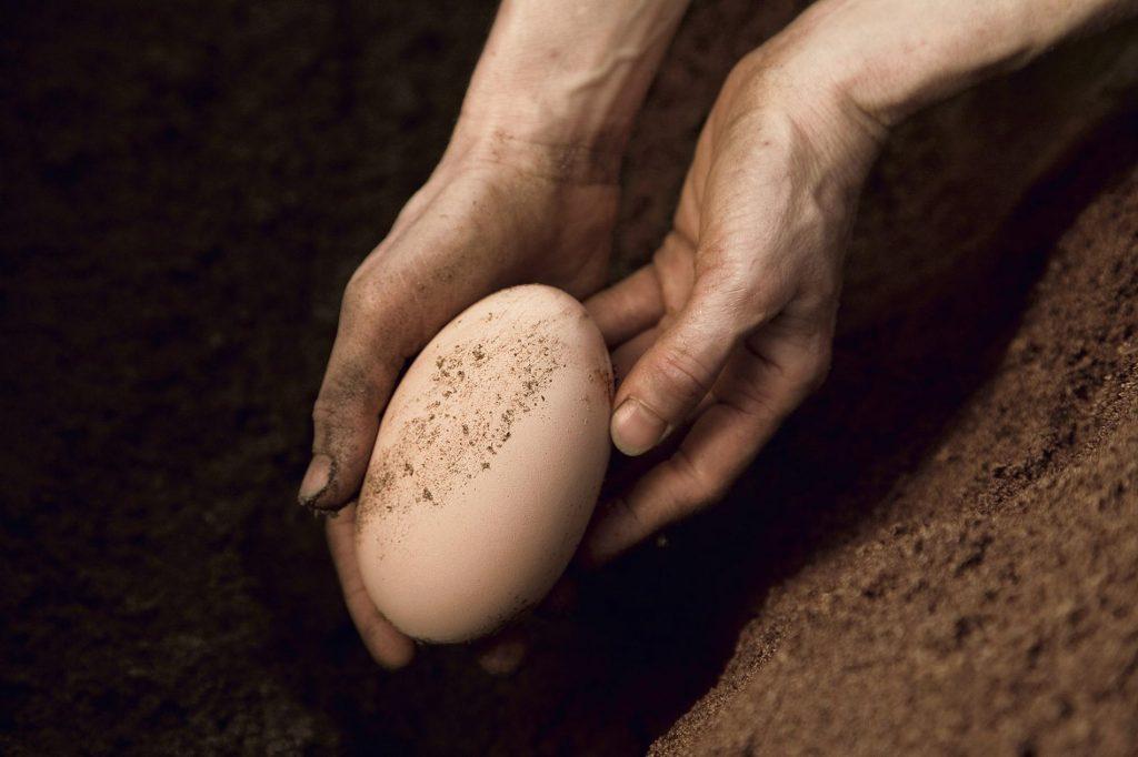 Gambar 3. Maleo egg by Natgeo