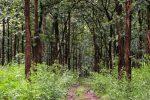 Pohon Jati: Pohon kuat serba Guna
