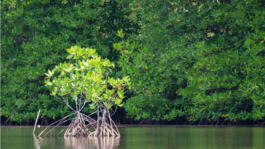 Hutan Mangrove © www.thegef.org