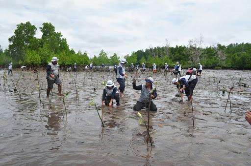 Rehabilitasi Hutan Mangrove © ksdae.menlhk.go.id