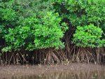 Bizlab: Alam Kita, Tanggung Jawab Siapa?