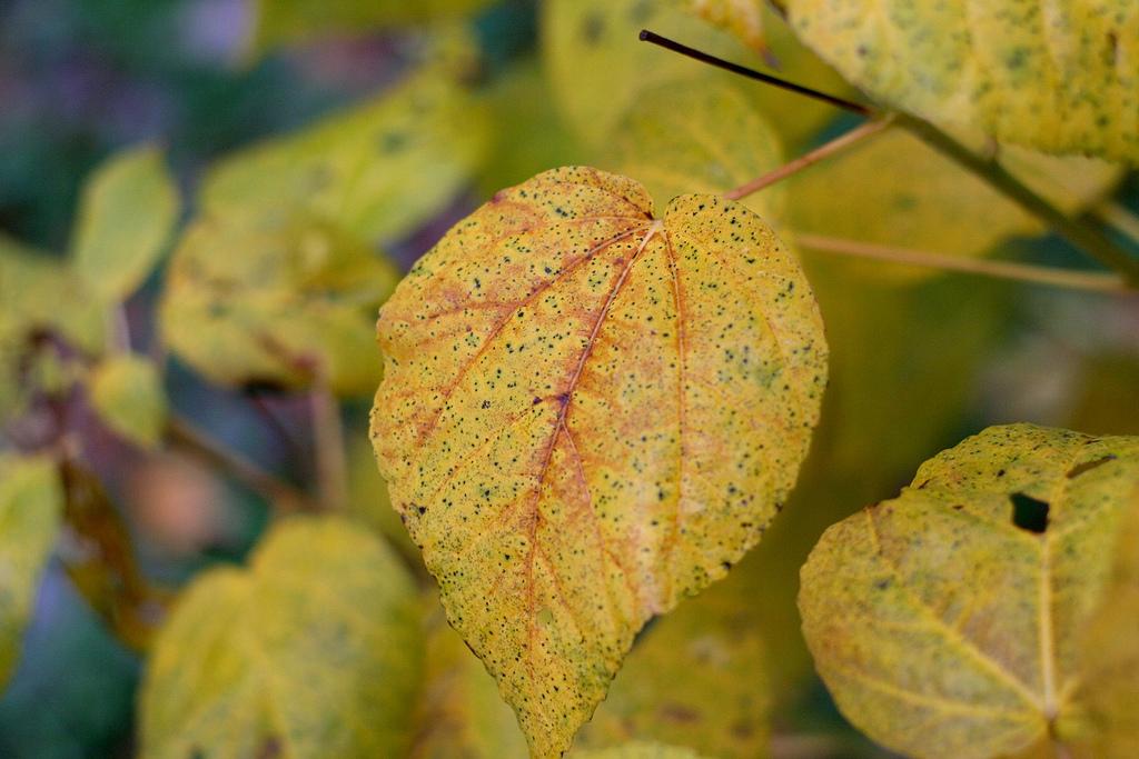 Penguningan pada Daun © gardeningknowhow.com