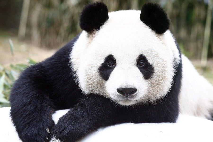spesies beruang