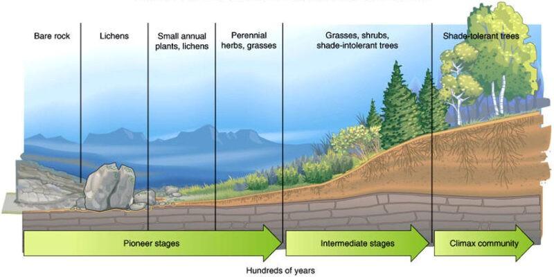 Gambar 2 Proses Suksesi Ekologi