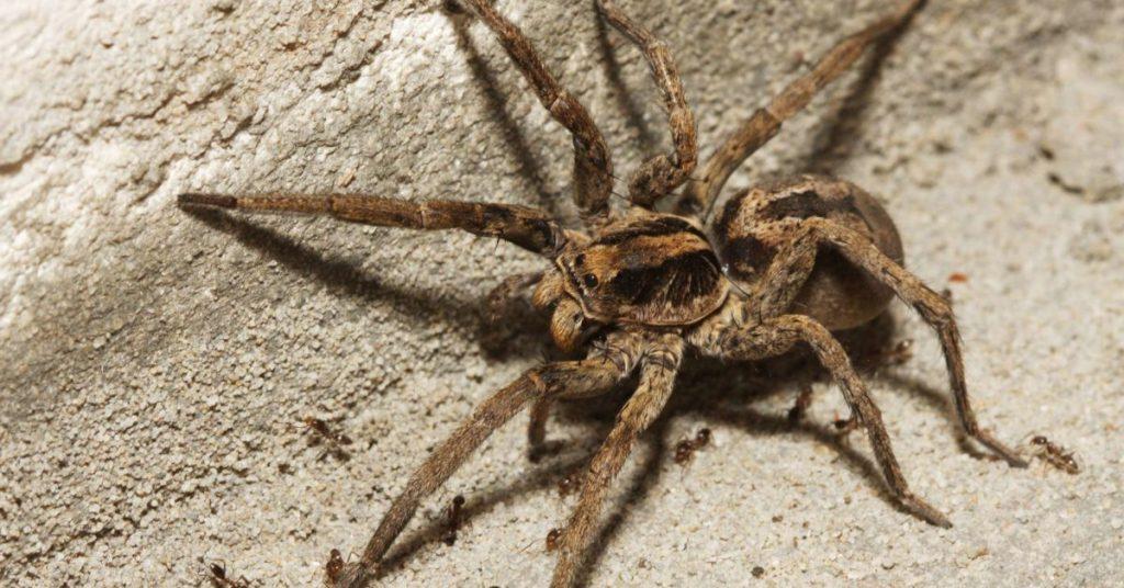 Gambar 8. spider