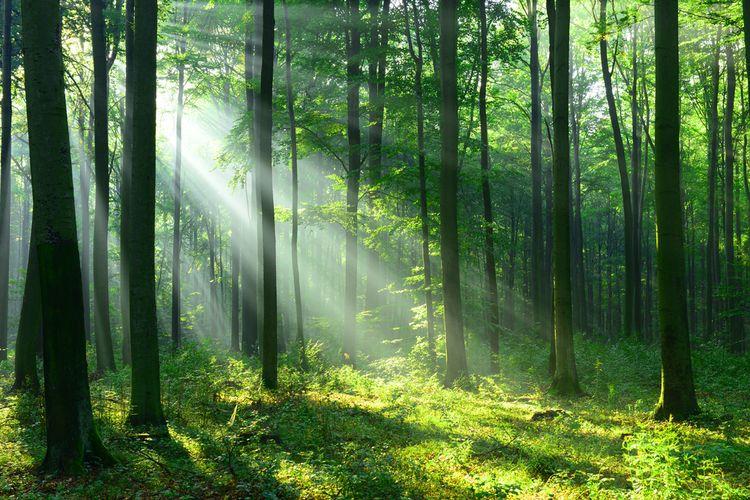 hutan menghilang