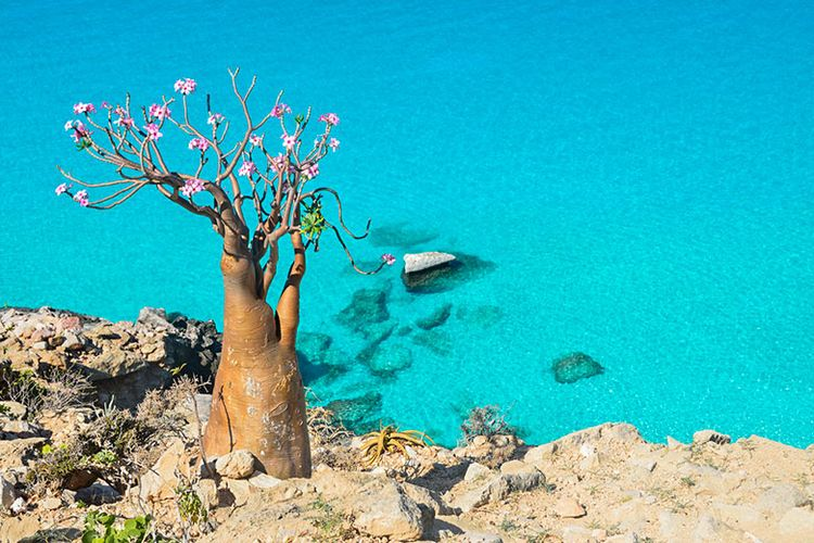 pulau socotra