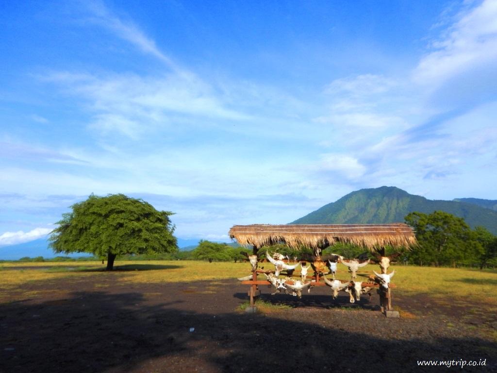 Gambar 1. Taman Nasional Baluran dengan Latar Belakang Gunung dan Savana