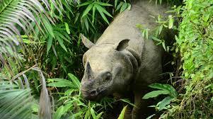 Fauna Ekosistem Hutan