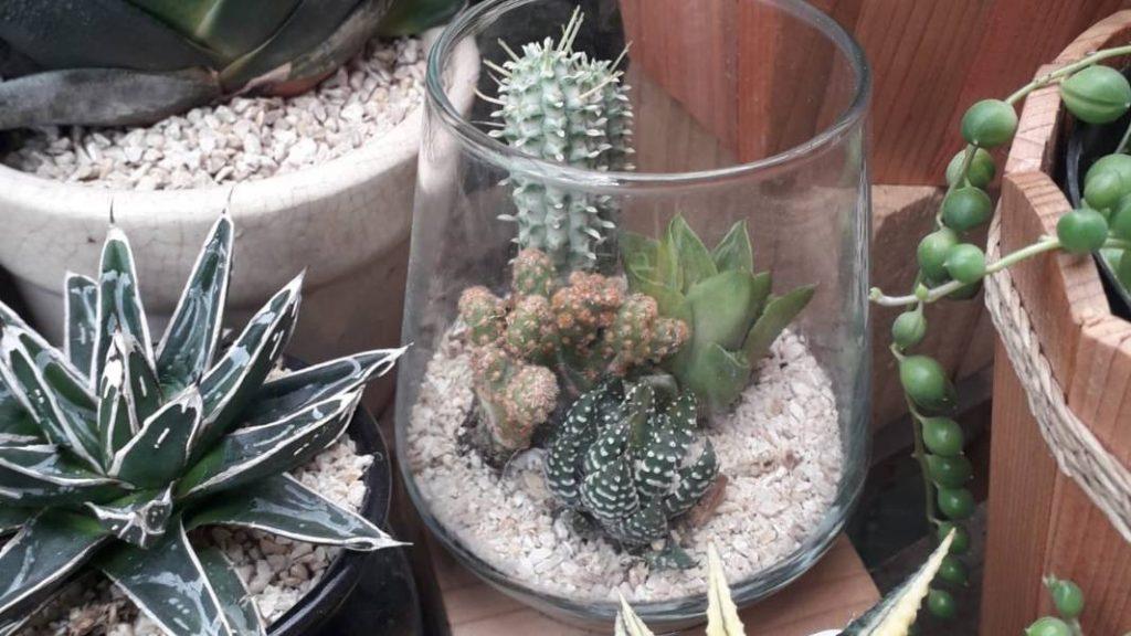Gambar 1 Kaktus dan Sukulen dalam Terarium