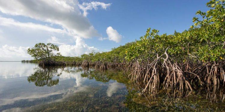 Gambar 1. Hutan Mangrove – Wanaswara
