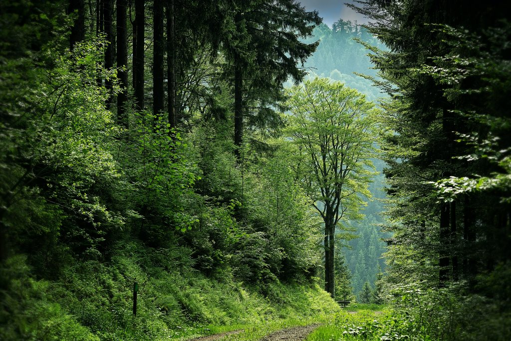 Gambar 1. Pohon Memiliki Mekanisme Perlindungan Diri yang Unik Karena Ketidakmampuannya untuk Berpindah Tempat