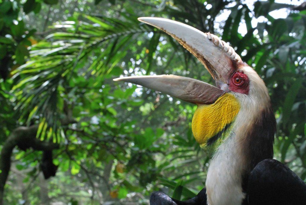 Gambar 3. Burung Rangkong