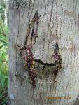 Penyakit Hutan, Jenis-Jenis dan Upaya Mengatasinya