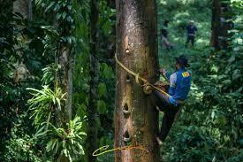 Gambar 1: Hasil Hutan Indonesia