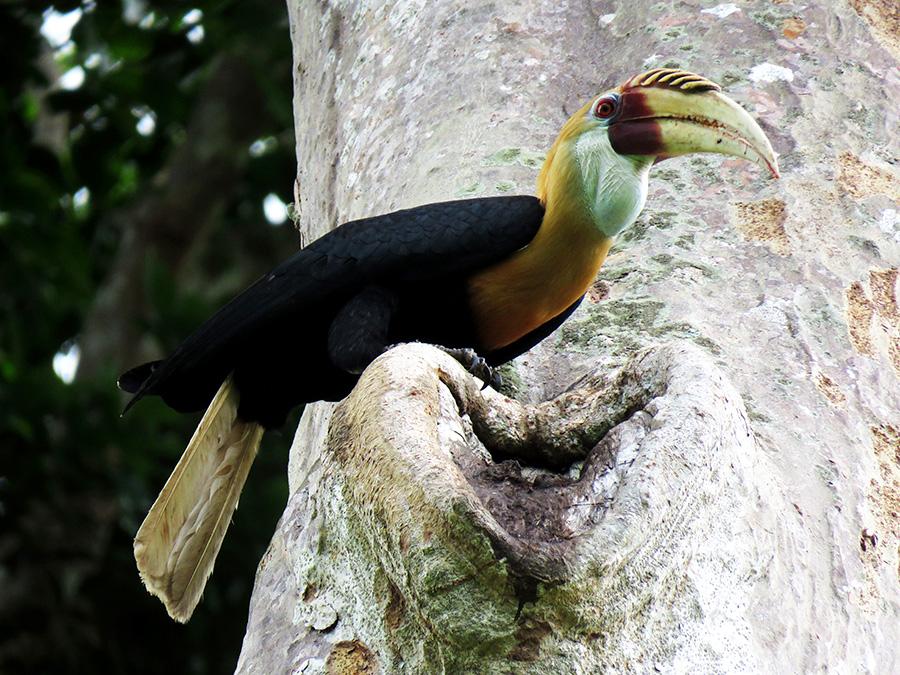 pohon dan kehidupan burung