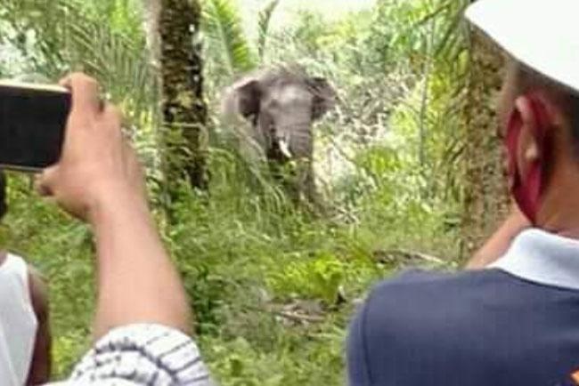 Kabar Fauna Hutan – Wanaswara