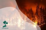Penanganan Terhadap Kebakaran Hutan