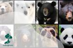 Ayo Kenalan dengan Berbagai Spesies Beruang di Dunia!