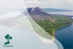 Fenomena Suksesi Ekologi Hutan Alami di Bekas Letusan Krakatau