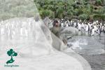 Gajah Laut, Spesies Anjing Laut Terbesar yang Memiliki Belalai
