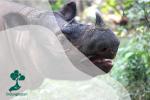 Badak Jawa dan Badak Sumatera yang Terancam Punah