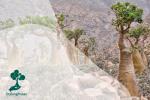 5 Flora dan Fauna Endemik Pulau 'Alien' Socotra