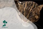 Kucing Bakau, Si Penyelam Ahli yang Populasinya Kian Kritis