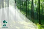 Apa yang Terjadi Bila Seluruh Hutan Dunia Menghilang?