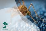 7 Serangga Mematikan di Dunia Yang Harus Kamu Tahu!