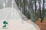 Fenomena Dancing Forest dan Crooked Forest : Ketika Pohon Terlihat Menari dan Memiliki Bentuk Aneh