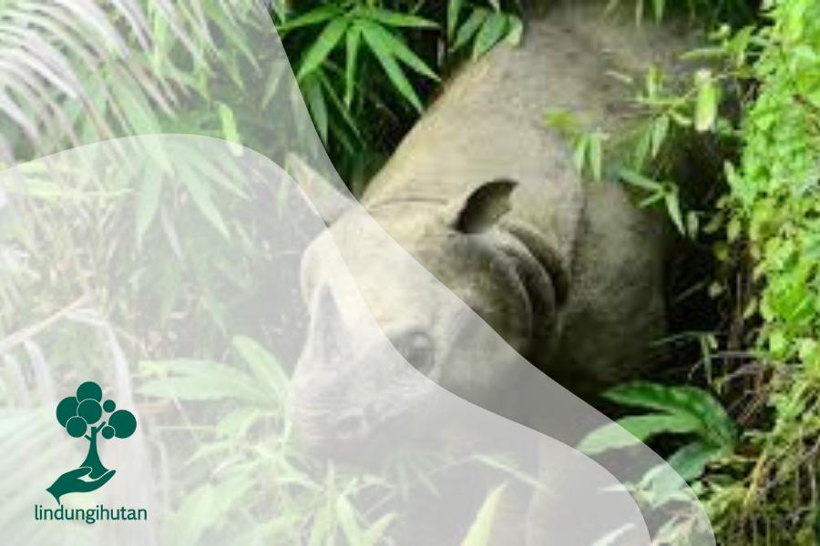 Fauna dalam Ekosistem Hutan
