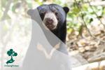 Mengenal Beruang Madu, Ikon Satwa Khas Bengkulu