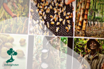 Lebah, Hutan, dan Hasil Hutan
