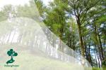 Tanaman Alelopati pada Kegiatan Agroforestri